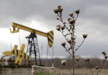 Plants are pictured near an oil pump, owned by oil company Rosneft, in the settlement of Akhtyrskaya in Krasnodar region, southern Russia, December 21, 2014. REUTERS/Eduard Korniyenko