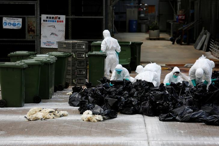 Health officers cull poultry at a wholesale market, as trade in live poultry suspended after a spot check at a local street market revealed the presence of H7N9 bird flu virus, in Hong Kong June 7, 2016. REUTERS/Bobby Yip/Files