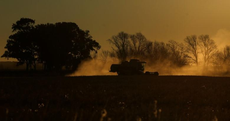 Soybeans are harvested at a farm near Balcarce, Argentina, June 17, 2016.  REUTERS/Marcos Brindicci