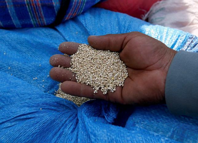 2月8日、古代インカで「母なる穀物」と呼ばれ、聖なる食品として扱われていたキヌアについて、科学者らが苦みの原因となっているサポニンの生成を誘導する遺伝子を特定したとの研究結果が科学誌ネイチャーに掲載された。写真は2014年4月撮影(2017年 ロイター/David Mercado)