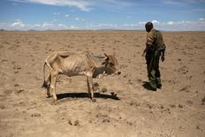 A Kenyan soldier looks at a cow which is dying from hunger, a few hundred meters from the official boundary of the Kenya-Ethiopia border in northwestern Kenya October 13, 2013. REUTERS/Siegfried Modola/File Photo