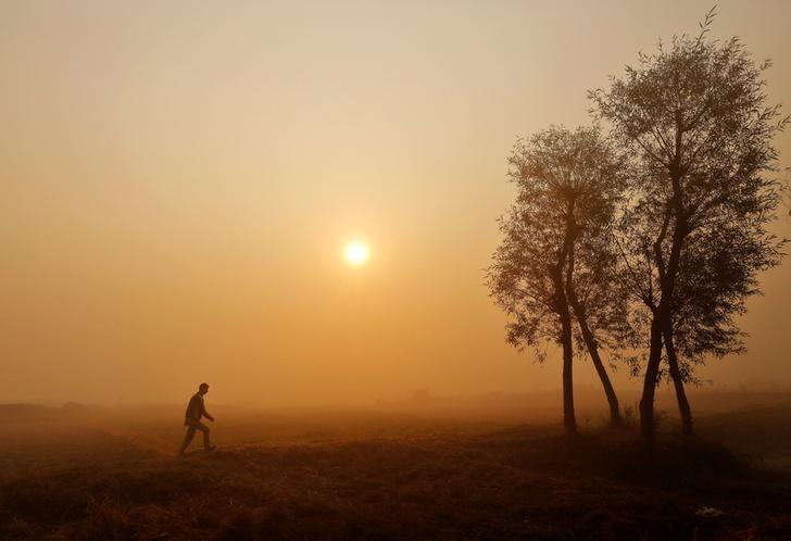 A boy walks through a paddy field on a foggy morning on the outskirts of Srinagar, November 1, 2016. REUTERS/Danish Ismaill/Files