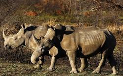 تراجع صيد وحيد القرن في جنوب أفريقيا عشرة في المئة في 2016