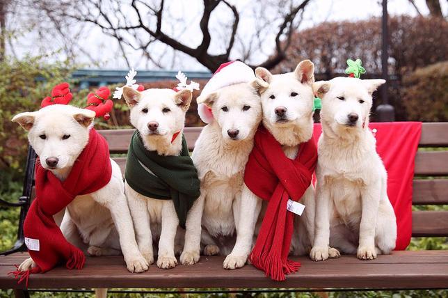 3月14日、罷免された韓国の朴槿恵(パク・クネ)・前大統領が12日に青瓦台(大統領府)を退去した際、9匹のペット犬を置き去りにしたとして、韓国の動物愛護団体が警察に苦情を申し立てた。写真は2015年12月公表の提供写真(2017年 ロイター/The Presidential Blue House/News1 )