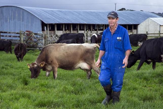 3月16日、ニュージーランド統計局が発表した2016年第4・四半期の国内総生産(GDP)は、季節調整済みで前期比0.4%増と、市場予想(0.7%増)を下回り、2015年第2・四半期以来の低い伸びとなった。写真はオークランドの北にある街の酪農家。2015年9月撮影(2017年 ロイター/Nigel Marple)