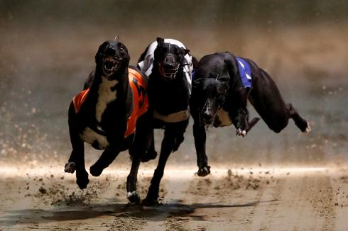 London's last greyhound track