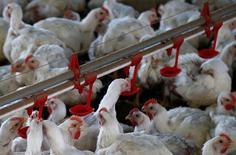 Galinhas são fotografadas em uma fábrica de aves na cidade de Lapa, Paraná  31/05/2016      REUTERS/Rodolfo Buhrer