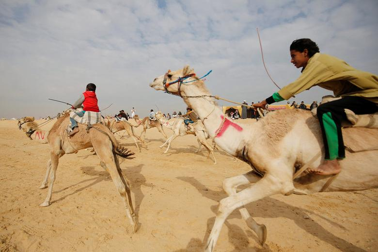 Jockeys, most of whom are children, compete on their mounts during the opening of the International Camel Racing festival at the Sarabium desert in Ismailia, Egypt, March 21, 2017. Picture taken March 21, 2017. REUTERS/Amr Abdallah Dalsh