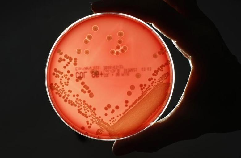 MRSA (Methicillin-resistant Staphylococcus aureus) bacteria strain is seen in a petri dish containing agar jelly for bacterial culture in a microbiological laboratory in Berlin March 1, 2008. MRSA is a drug-resistant ''superbug'', which can cause deadly infections.    REUTERS/Fabrizio Bensch