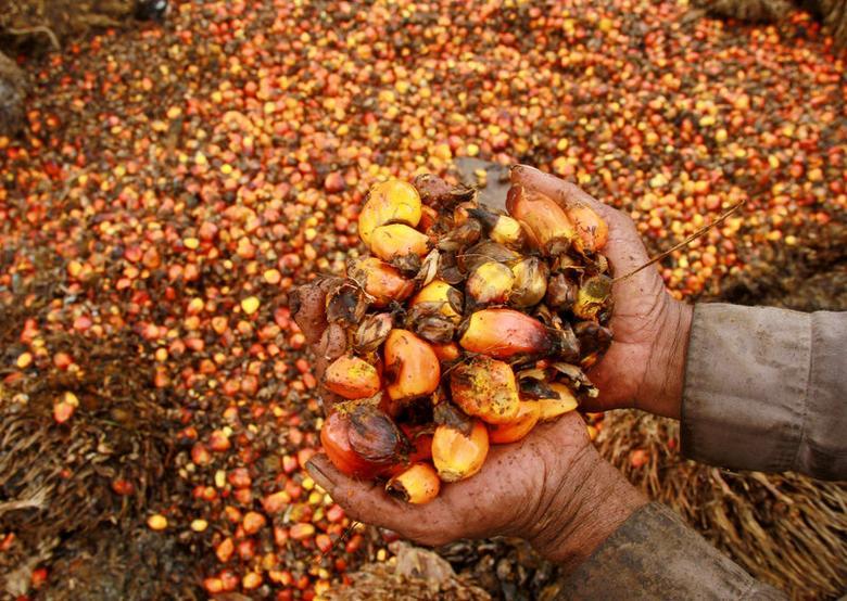 A worker shows palm oil fruits at palm oil plantation in Topoyo village in Mamuju, Indonesia, Sulawesi Island, March 25, 2017 in this photo taken by Antara Foto. Antara Foto/Akbar Tado/via REUTERS