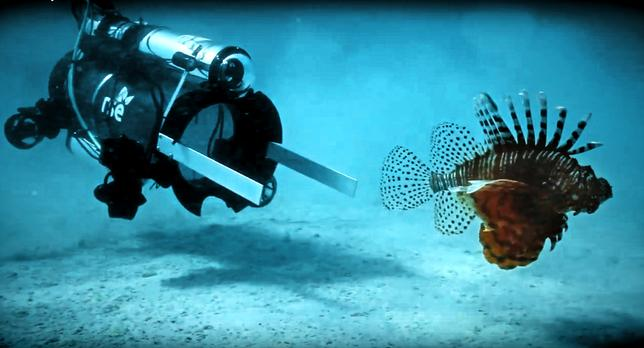 An unmanned undersea robot, designed to go underwater below sport diver depth, the Guardian LF1 by Robots in Service of the Environment (RSE) approaches an invasive lionfish before stunning and collecting it in a marine enclosure in Bermuda on April 18, 2017.   Philippe Rouja/Courtesy RSE/Handout via REUTERS