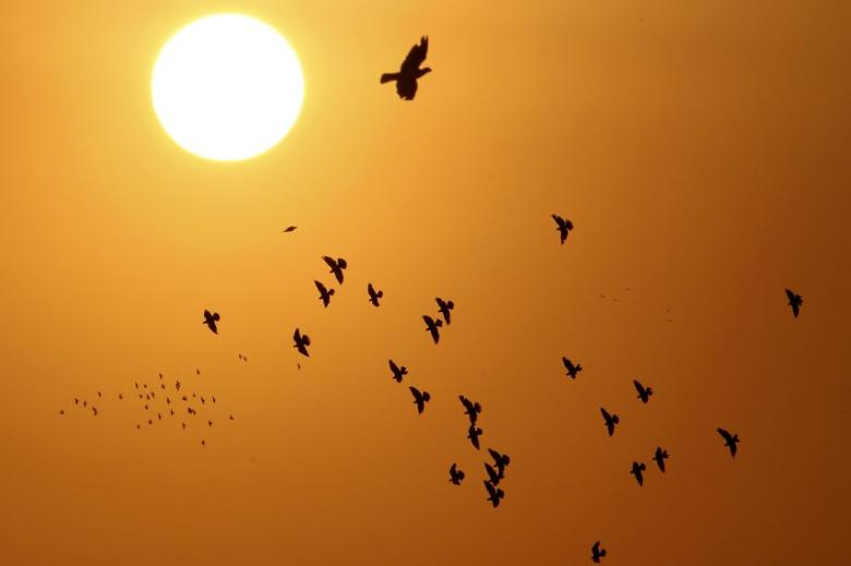 Doves, silhouetted against the rising sun, fly over the Jordanian capital of Amman September 5, 2013. REUTERS/Muhammad Hamed