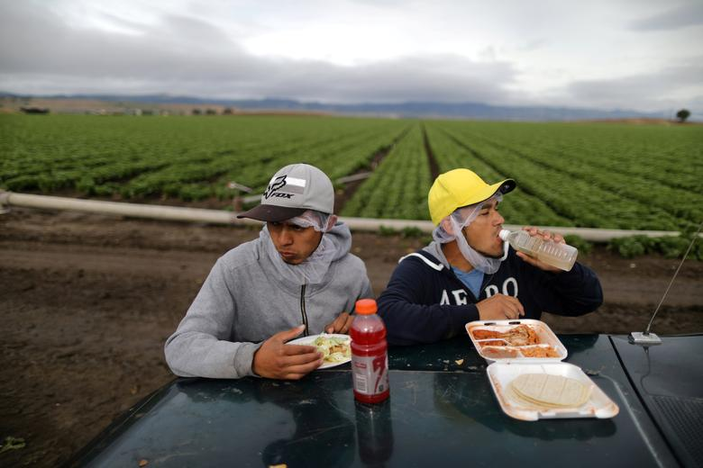 Mexican migrant farmworkers Jesus Martin Ley Lugo, 27, (R) and Rogelio Garcia Parria, 20, who both have H-2A visas, eat during a break while harvesting romaine lettuce in King City, California, April 17, 2017. REUTERS/Lucy Nicholson