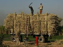 Farmers pack sugar cane in the southern Egyptian town of Nagaa Hamady in Qena, some 700 km (435 miles) south of Cairo,  file.   REUTERS/Asmaa Waguih