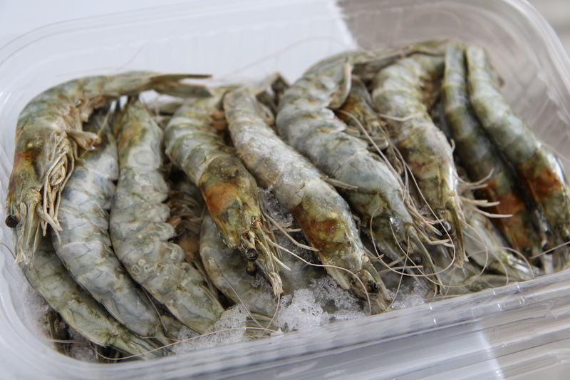 Shrimps produced at the high-tech Shrimp Cultivation Research Center, a joint venture project between South Korea and Algeria, in Ouargla, southern Algeria, April 11, 2018. Thomson Reuters Foundation/Thin Lei Win