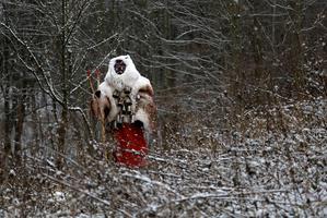 Devils chase children in eerie Czech Christmas custom