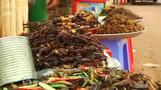 カンボジアで食用タランチュラが最盛期、外国人の購入も(字幕・23日)
