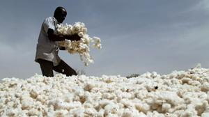 Inside Burkina Faso's failed GM cotton experiment