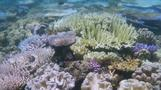Stark coral warning issued by scientists