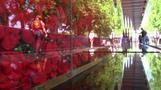 نصب تذكاري من زهور الخشخاش تكريما لمن لقوا حتفهم في الخدمة بالجيش الأمريكي