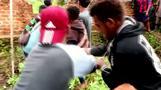 قرويون في إندونيسيا يقتلون نحو 300 تمساح في هجوم انتقامي