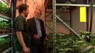 From the Republican elite to the marijuana farm