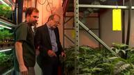 Reagan lawyer co-owns marijuana farm