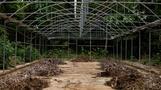 Victim of crisis: Caracas' dying botanical garden