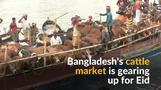 Bangladesh's cattle market thrives ahead of Eid