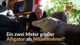 Ein Alligator als Mitbewohner