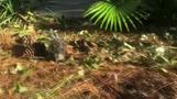 ハリケーンの中で誕生したヤマアラシの赤ちゃん、動物園職員を勇気づける(16日)