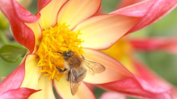 AI to help researchers stop the decline of bees