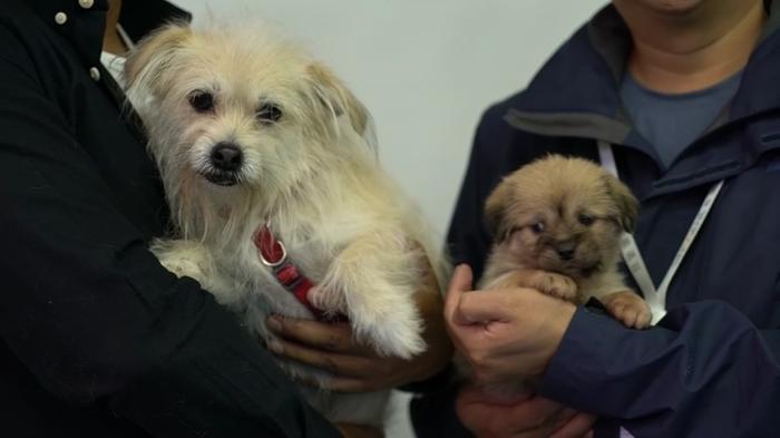 愛犬をもう1匹作ります、中国でペットのクローンビジネスが話題(字幕・17日)