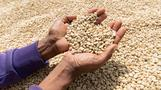 The coffee farmers earning less than a cent a cup