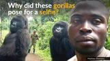Gorillas 'know us', says ranger who took viral selfie