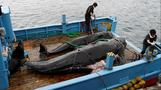 Japan whaling town hopes to keep tradition alive