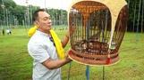 Vogel-Gesangswettbewerb in Singapur