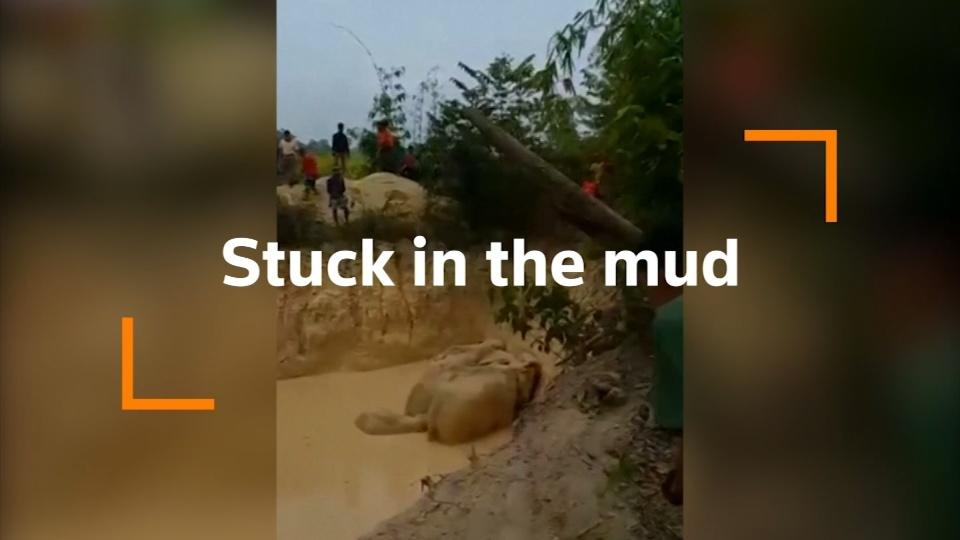Elephants saved after getting stuck in muddy pond