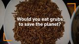 South Africans get the bug: Cape Town diner serves insect-only meals