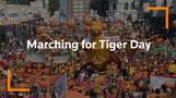 Russia's Vladivostok turns orange for Tiger Day
