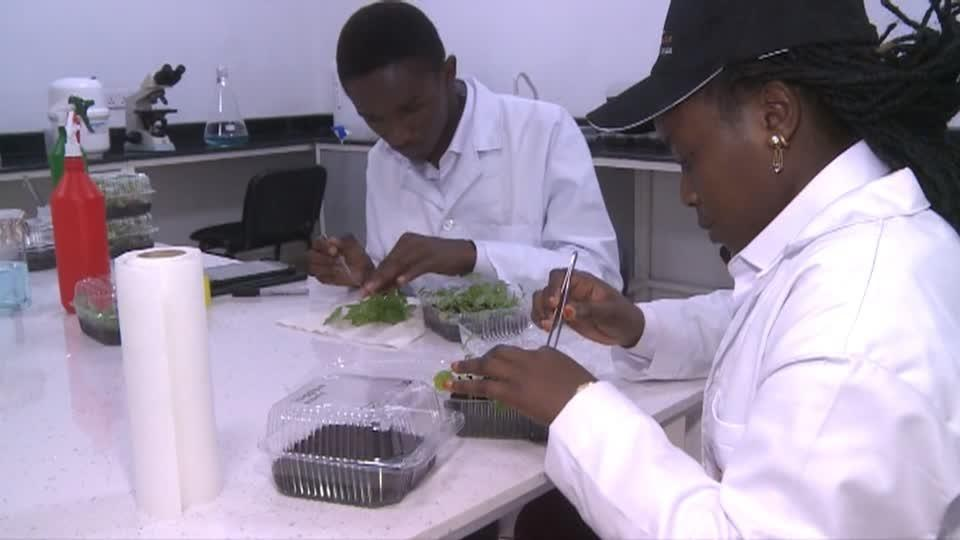 Congo opens new agriculture center in biotech push