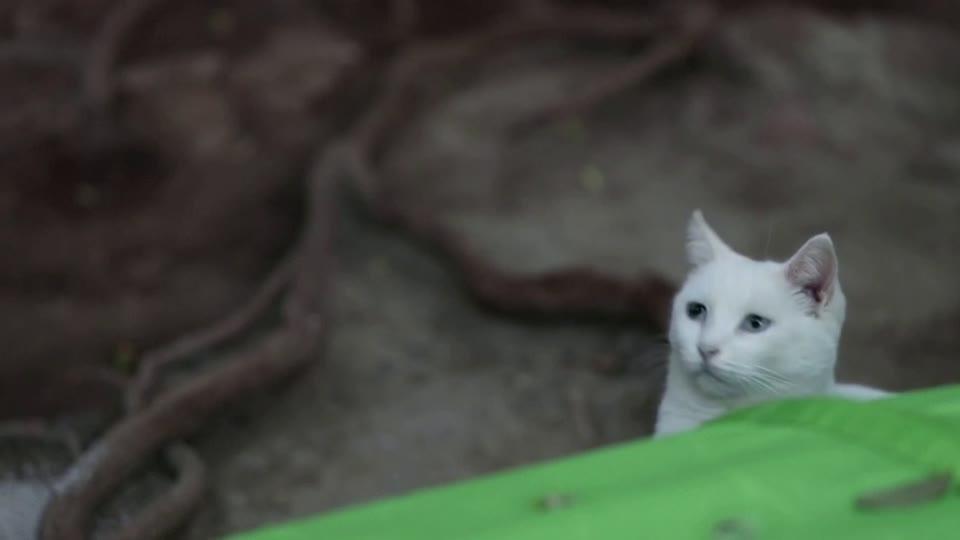 Cat sanctuary offers online matches