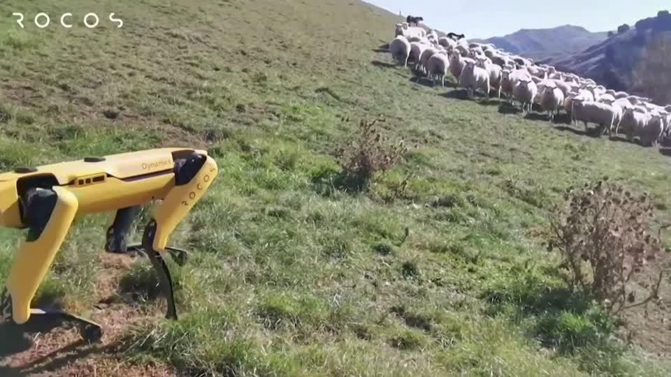 Meet the sheepdog robot that could be a farmers' best friend