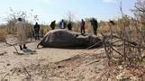 ボツワナのゾウ大量死、検査結果を公表へ(字幕・10日)