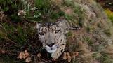 野生動物の減少止まらず、各国はさらなる取り組みを=国連報告書(字幕・16日)