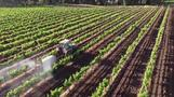 Australian winemakers toast to wine boom at home