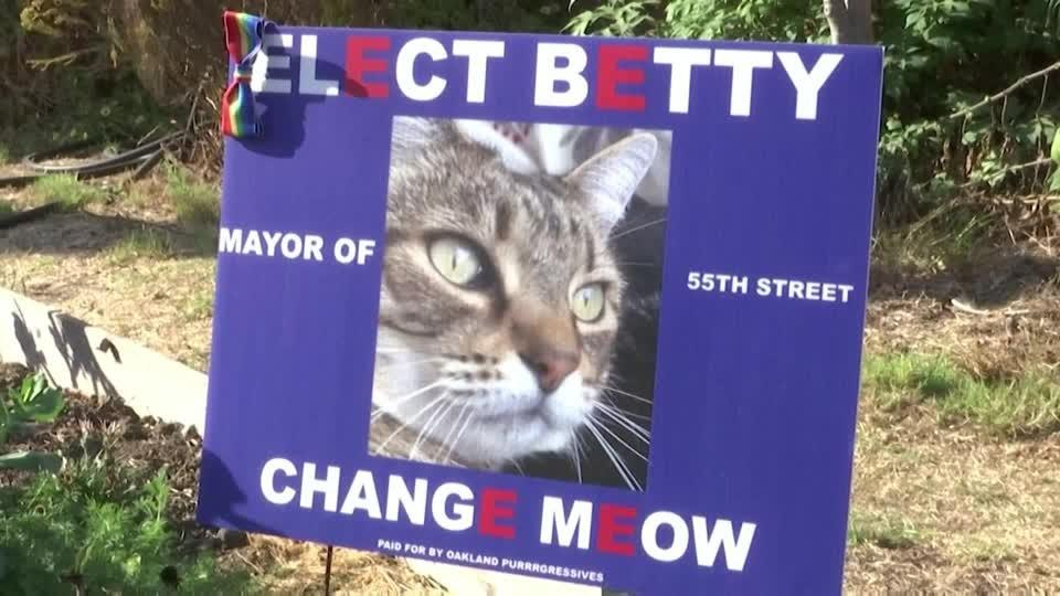 Local mayoral candidate calls for 'change meow'