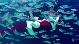 Santa Claus dives deep into Tokyo aquarium