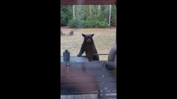 誰だ!?うちの庭で勝手に遊んでいるのは → クマの家族でした(字幕・13日)
