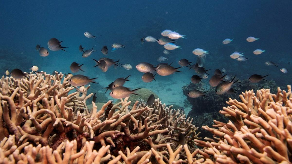 UNESCO angers greens on Great Barrier Reef